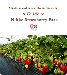 Stroller-and wheelchair-friendly!  A Guide to  Nikko Strawberry