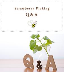 Strawberry Picking Q&A